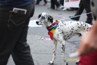 Algunas imágenes de la Marcha de la Igualdad 2012 8