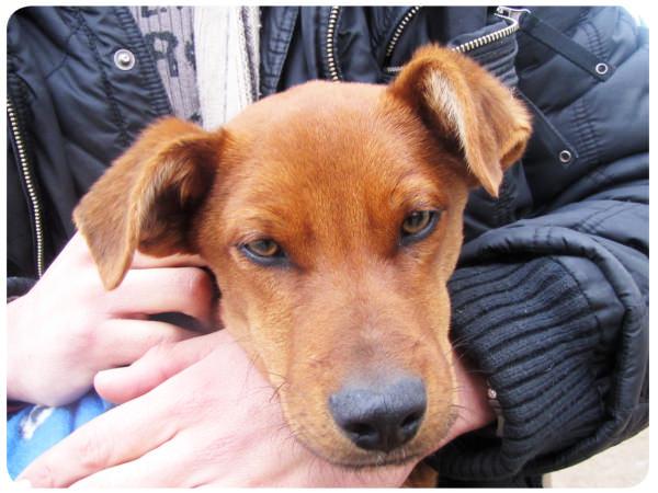 Jornada de adopción de perros en el MIM 1