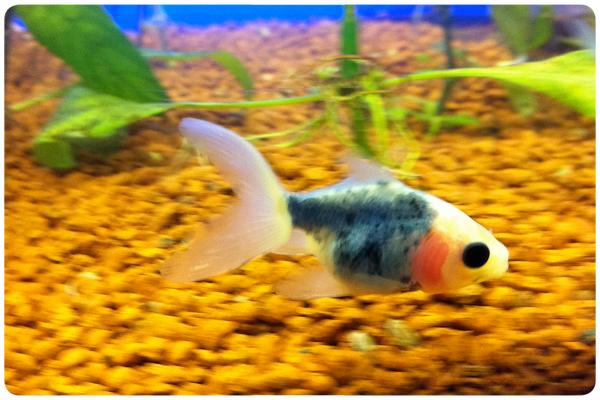 Álbum Zancada: El primer pez 1