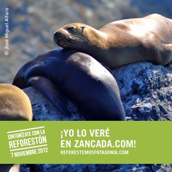 Reforestemos Patagonia: Llegó el día de La Reforestón 1