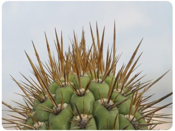 Álbum Zancada: vegetación en La Campana 1