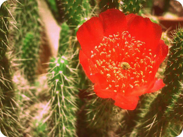 Álbum Zancada: Flor de Navidad 1