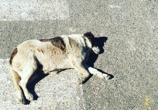Ley de tenencia responsable de mascotas: a un paso de ser realidad 3