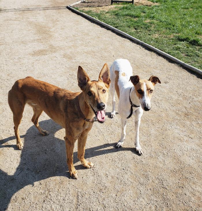 Mascotas & compañer@s: Isadora, Toldo y Mini Bilz 2