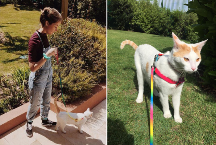 Mascotas & compañeras: Frida, Dalí y Josefina 4