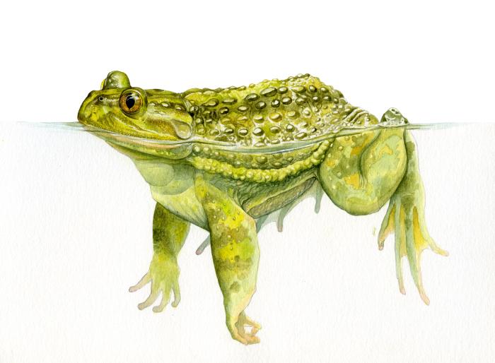 Entrevista a Javiera Constanzo, ilustradora, defensora y amante de la naturaleza 3