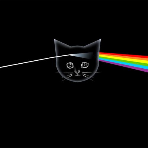 The kitten covers, discografía dominada por gatitos 15