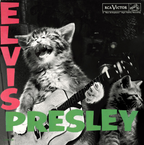 The kitten covers, discografía dominada por gatitos 16