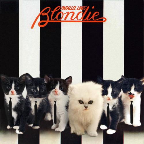 The kitten covers, discografía dominada por gatitos 19