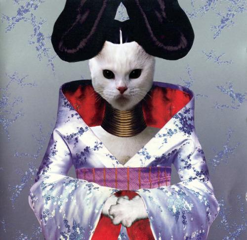 The kitten covers, discografía dominada por gatitos 2