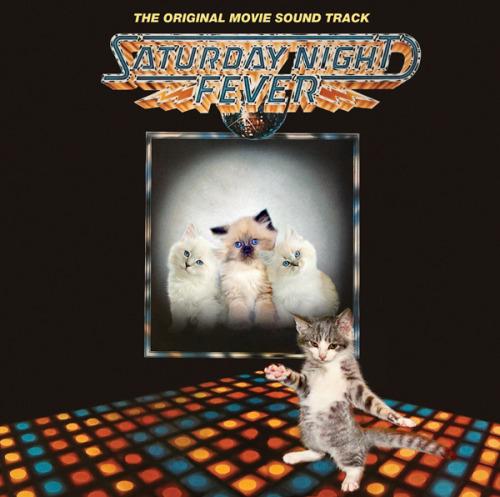 The kitten covers, discografía dominada por gatitos 20