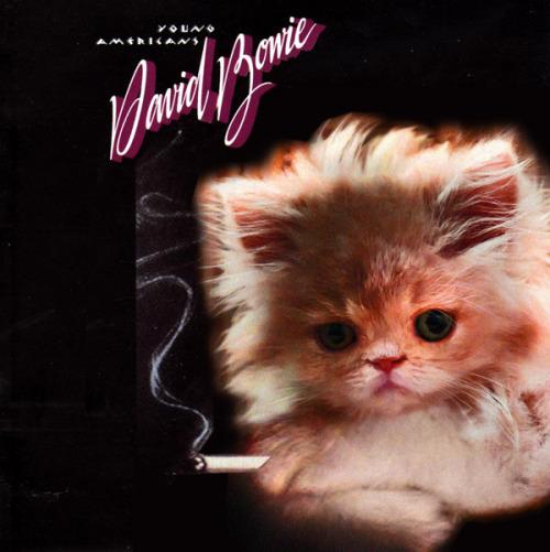 The kitten covers, discografía dominada por gatitos 21