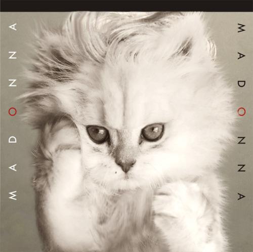 The kitten covers, discografía dominada por gatitos 23
