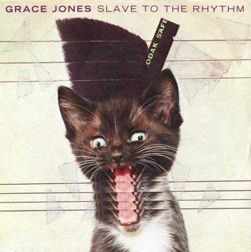 The kitten covers, discografía dominada por gatitos 26