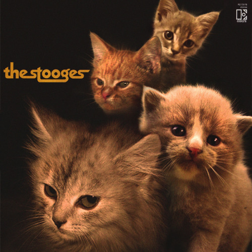 The kitten covers, discografía dominada por gatitos 27