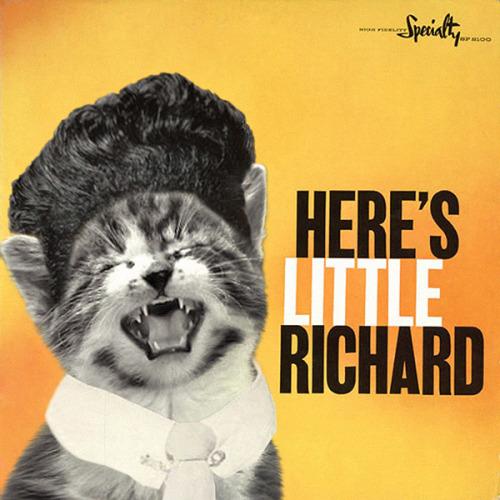 The kitten covers, discografía dominada por gatitos 35