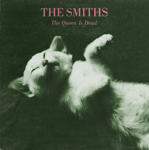 The kitten covers, discografía dominada por gatitos 8