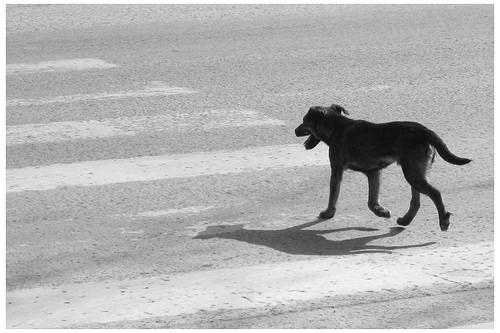 Perritos accidentados: nada que hacer?! 1