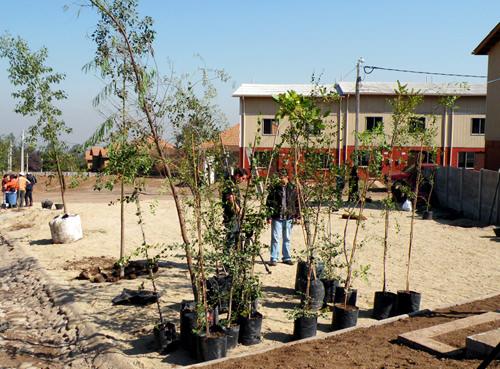 Jornada de Plantación de Arboles LG & Un techo para Chile 2