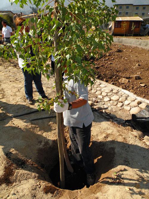 Jornada de Plantación de Arboles LG & Un techo para Chile 5