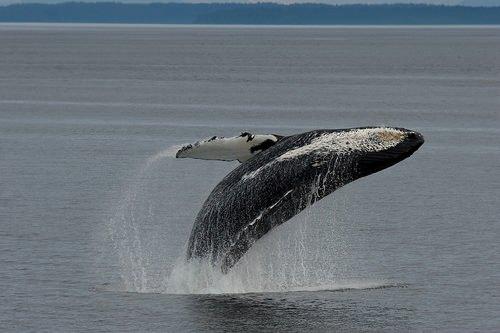La polémica de las ballenas 1