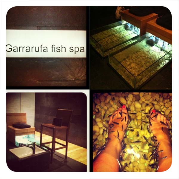 Garra rufa: peces que exfolian los pies 1