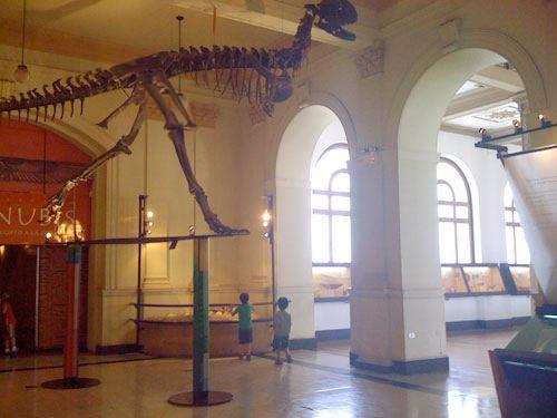 Talleres gratuitos en el Museo Nacional de Historia Natural 1