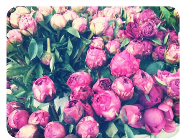 Peonías para esta primavera 1