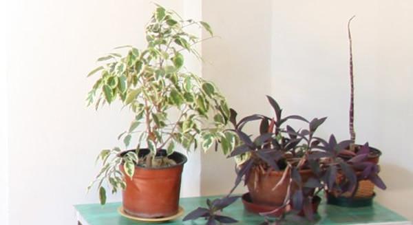 Plantas en la casa 1